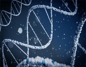 Epigenetic Memory of Our Genes